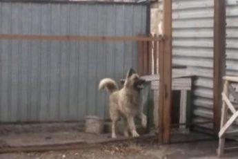 Собака-танцевака