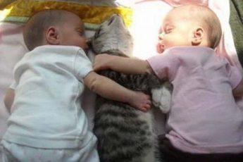 Детки спят с кошкой