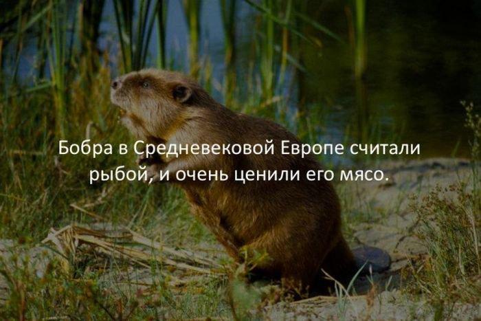 interesnye_fakty_43_foto_11