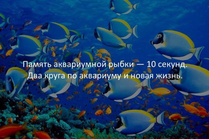 interesnye_fakty_43_foto_16
