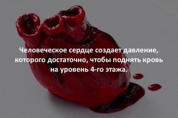 interesnye_fakty_43_foto_17