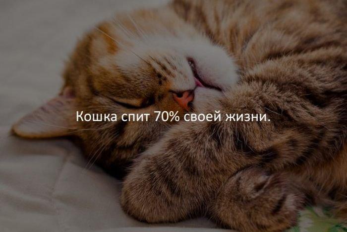 interesnye_fakty_43_foto_24