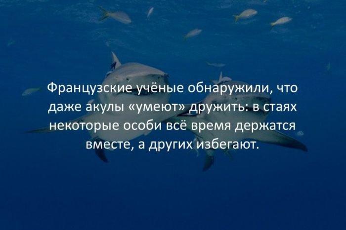 interesnye_fakty_43_foto_33