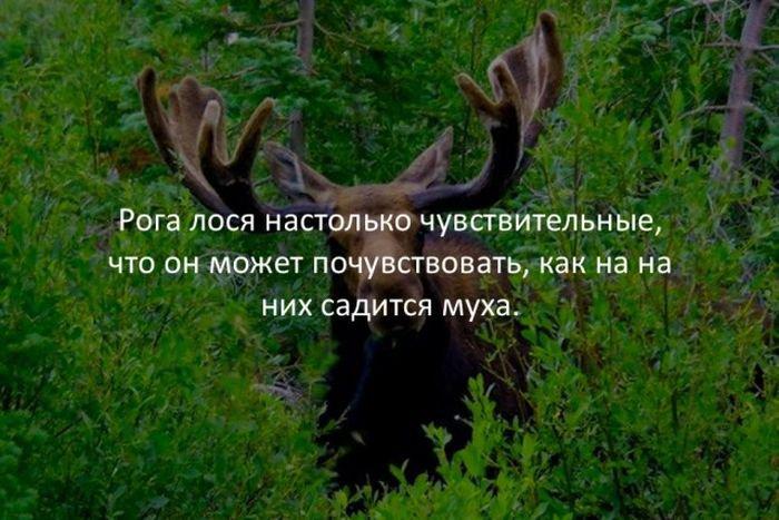 interesnye_fakty_43_foto_39