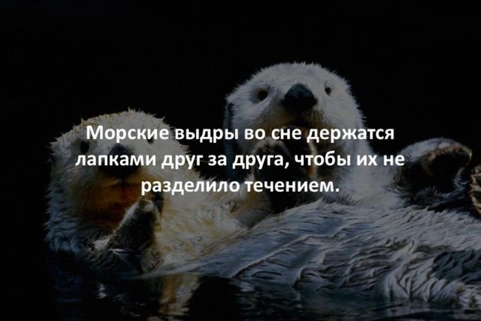 interesnye_fakty_43_foto_6