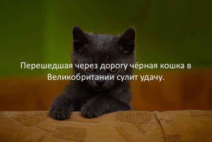 interesnye_fakty_43_foto_7