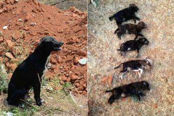 Жестокая женщина убила 8 щенят на глазах у их матери!