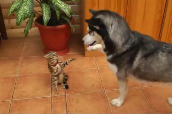 Хаски лучшие собаки в мире!
