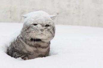 kot-v-snegu-3
