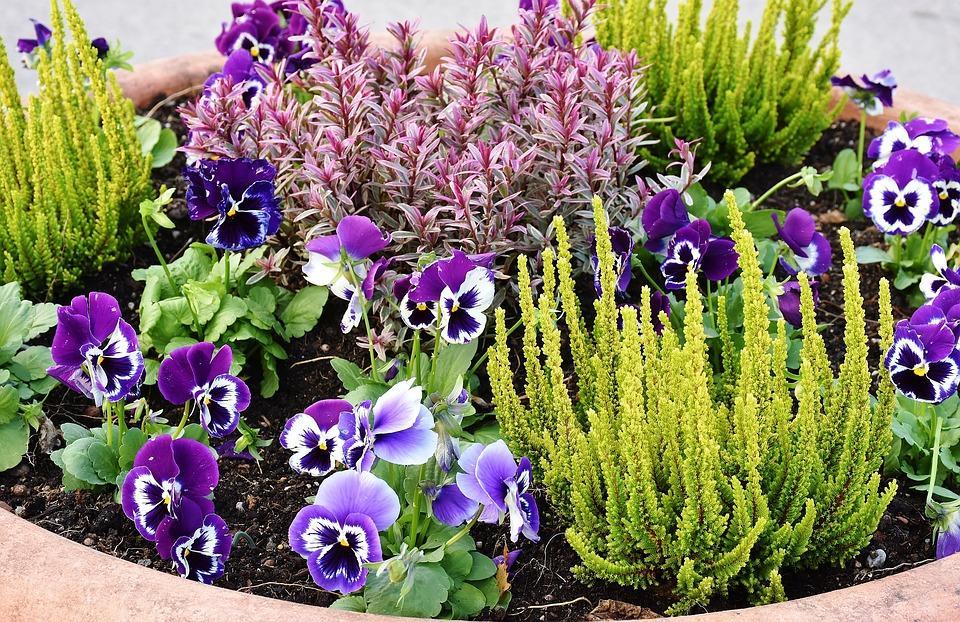 planting-2921805_960_720[1]