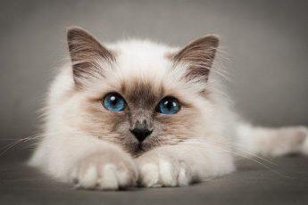 Почему не стоит поить кота валерьянкой и что случится, если это сделать