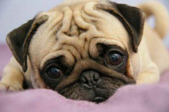 Собака–доброе сердце